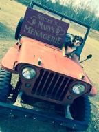 Jeep on a vintage Jeep!